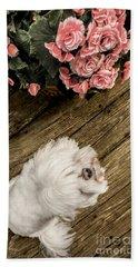 Havanese Puppy Beach Sheet