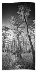 Tall Cypress Trees Beach Sheet by Bradley R Youngberg