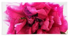 Temptation Rose In Color Beach Towel by Louise Kumpf