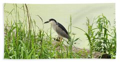 The Black-crowned Night Heron Beach Towel by Verana Stark