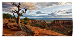 The Crooked Old Tree Beach Towel by Ronda Kimbrow