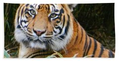 The Eyes Of A Sumatran Tiger Beach Towel