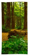 The Forest Of Golden Gate Park Beach Towel