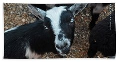 Beach Towel featuring the photograph The Goat With The Gorgeous Eyes by Verana Stark