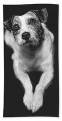 Beach Towel featuring the drawing The Jack Russell Stare- Got Ball? by Rachel Hames