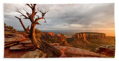 The Light On The Crooked Old Tree Beach Towel by Ronda Kimbrow
