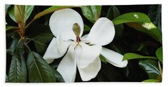 Beach Towel featuring the photograph The Magnolia Bloom  by James C Thomas