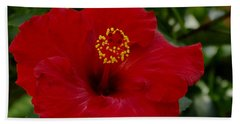 Beach Sheet featuring the photograph  Red Hibiscus by James C Thomas