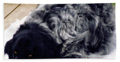 Beach Towel featuring the photograph The Shaggy Dog Named Shaddy by Marian Cates