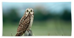 The Short-eared Owl  Beach Towel