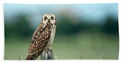 The Short-eared Owl  Beach Sheet