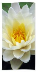 Beach Sheet featuring the photograph The Water Lilies Collection - 03 by Pamela Critchlow