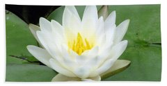 Beach Sheet featuring the photograph The Water Lilies Collection - 04 by Pamela Critchlow