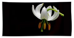 The White Form Of Lilium Martagon Named Album Beach Towel