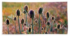 Thistles With Sunset Light Beach Towel