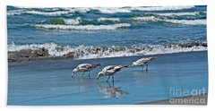 Beach Sheet featuring the photograph Three Seagulls At Ocean Shore Art Prints by Valerie Garner