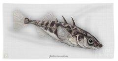 Three-spined Stickleback Gasterosteus Aculeatus - Stichling - L'epinoche - Espinoso - Kolmipiikki Beach Towel