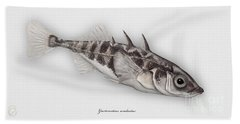 Three-spined Stickleback Gasterosteus Aculeatus - Stichling - L'epinoche - Espinoso - Kolmipiikki Beach Towel