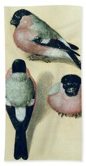 Three Studies Of A Bullfinch Beach Towel
