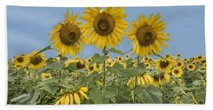 Three Sunflowers At The Front Of A Sunflower Field Beach Sheet