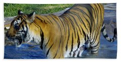 Tiger 4 Beach Towel