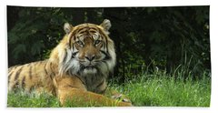 Beach Towel featuring the photograph Tiger At Rest by Lingfai Leung