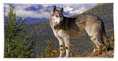 Timber Wolf, Canis Lupus Beach Towel