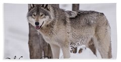 Timber Wolf Christmas Card English 3 Beach Towel