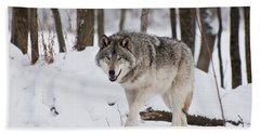 Beach Towel featuring the photograph Timber Wolf In Winter Forest by Wolves Only