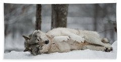 Timber Wolf In Winter Beach Towel