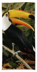 Toco Toucan Ramphastos Toco Calling Beach Towel by Claus Meyer