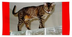 Beach Towel featuring the photograph Tora On Glass II by Phyllis Kaltenbach