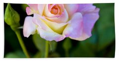 Beach Towel featuring the photograph Rose-touch Me Softly by David Millenheft