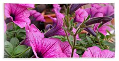Beach Towel featuring the photograph Trailing Petunias by Clare Bevan