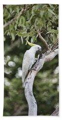 Tree Of Treats Beach Towel by Douglas Barnard