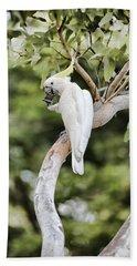 Tree Of Treats V2 Beach Towel by Douglas Barnard