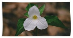 Trillium Beach Towel by David Porteus