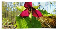 Beach Towel featuring the photograph Trillium Wild Flower by Sherman Perry