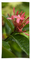 Tropical Flowers In Singapore Beach Towel