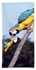 Tropical Parrots In Love Beach Towel