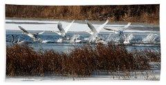 Beach Towel featuring the photograph Trumpeter Swans by John Freidenberg