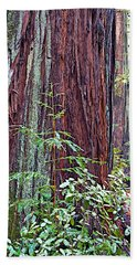 Trunk Of Coastal Redwood In Armstrong Redwoods State Preserve Near Guerneville-ca Beach Sheet