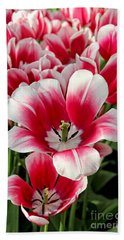 Tulip Annemarie Beach Towel