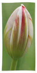 Tulip Red And White In Spring Beach Towel