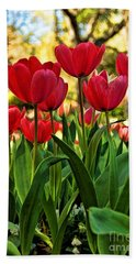 Tulip Time Beach Towel by Peggy Hughes