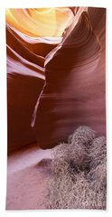 Beach Sheet featuring the photograph Tumbleweed In The Canyon by Bryan Keil