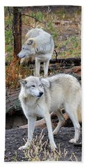 Beach Towel featuring the photograph Twin Wolves by Athena Mckinzie