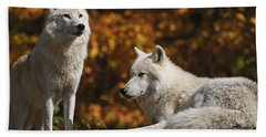 Beach Towel featuring the photograph Two Arctic Wolves On Rock Hill by Wolves Only