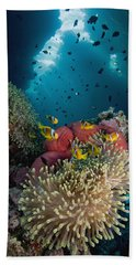 Two-banded Anemonefish And Bulb Beach Towel