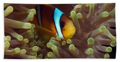 Two-banded Anemonefish Red Sea Egypt Beach Towel